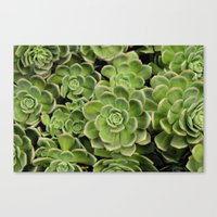 succulent Canvas Prints featuring Succulent by Cynthia del Rio