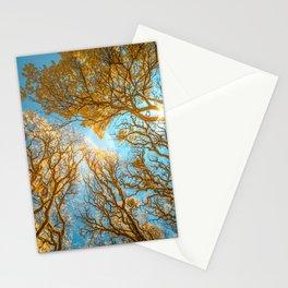 Morning Glory  Photography Stationery Cards