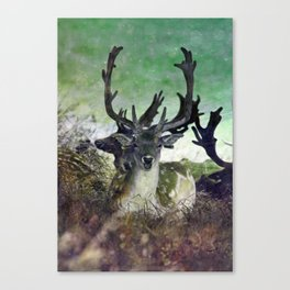 Ridiculously Photogenic Deer Canvas Print