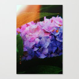 half & half Canvas Print