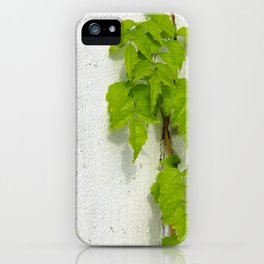 Wisteria plant climbing white plastered wall iPhone Case