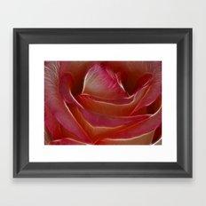Pretty Rose Framed Art Print