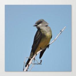 A Cassin's Kingbird Scopes the Skies for Flies Canvas Print