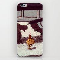 chicken iPhone & iPod Skins featuring Chicken by Javio