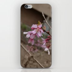 It's Spring Ya'll!! iPhone & iPod Skin