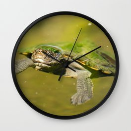 Mary River Turtle Wall Clock