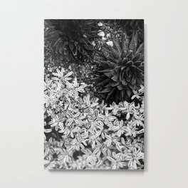Succulents in Black & White Metal Print