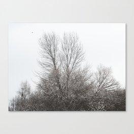 WinterSky #1 Canvas Print