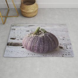Cactus Planter in sea shell of purple sea urchin Rug