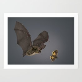 Brown Long-eared Bat Art Print