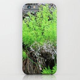 Green Forest Ferns iPhone Case