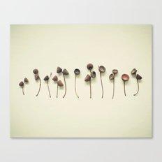 Acorn Collection Canvas Print