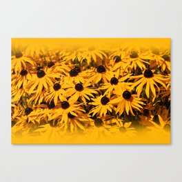 A Bed of Bloomin' Rudbeckias Canvas Print