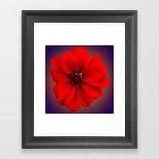 Red dahlia-bishop-of-llandaff Framed Art Print