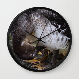 Muscovy Duck Dynasty #1 captured by Jo DiLorenzo Wall Clock