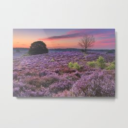 Blooming heather at dawn at the Posbank, The Netherlands Metal Print