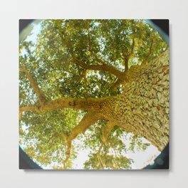 treeshade Metal Print