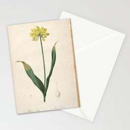 allium moly Redoute Roses 1 Stationery Cards