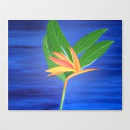 Bird of Paradise - Blue Background  Canvas Print