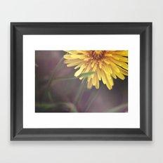 Last Dandelion Framed Art Print