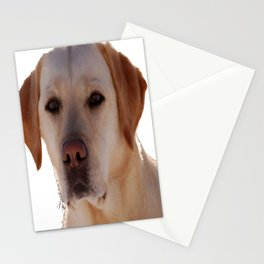 Portrait of A Golden Labrador Dog Stationery Cards