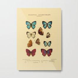 Lycaenidae Metal Print