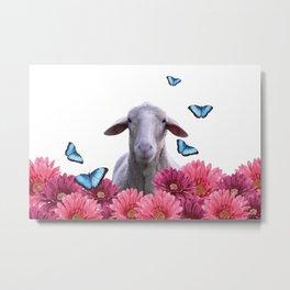 sheep butterflies gerbera  flowers pink Metal Print