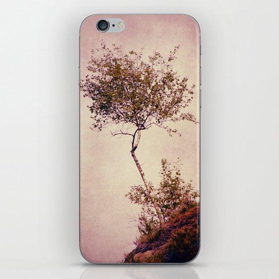 betulla iPhone & iPod Skin