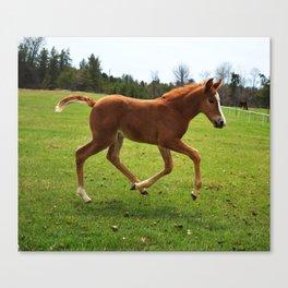 Little Running Man (horse) Canvas Print