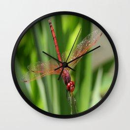Red Skimmer or Firecracker Dragonfly Closeup Wall Clock