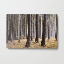 Into the pine forest we went Metal Print