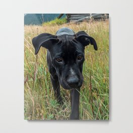 Doggy in the Field // Natural Filter Hiking by Rustic Abandoned Log Cabin Summit Colorado Metal Print