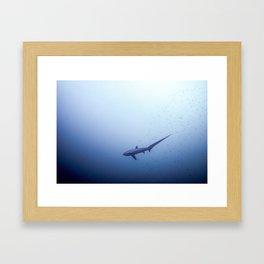 Thresher shark in the blue Framed Art Print