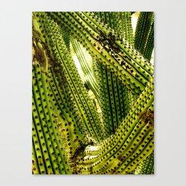 Monochrome Cactus Canvas Print