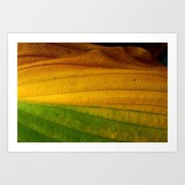 Green to Yellow  Art Print
