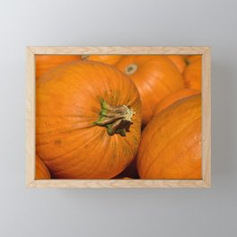 Pumpkins Framed Mini Art Print