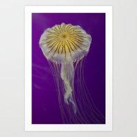 La méduse solitaire Art Print