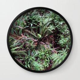Redwood Rainforest Ferns Wall Clock