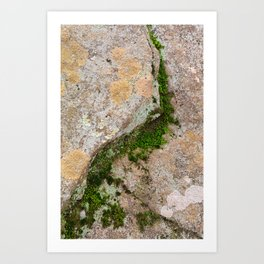 Yin Yang Moss Stone Art Print