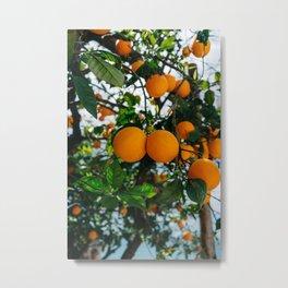 Amalfi Coast Oranges III Metal Print