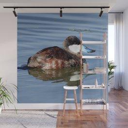 Male Ruddy Duck Wall Mural