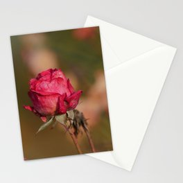Fading red winter rose | Graveyard flowers | The Netherlands | Fine art nature photogrpahy Stationery Cards