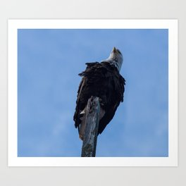 Bald Eagle Photography Print Art Print