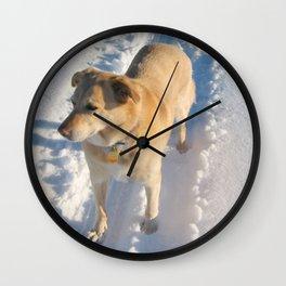 Dogs   Dog   Waiting Dog   Golden Lab Wall Clock