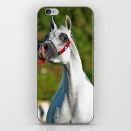 Arabian Horse 1 iPhone Skin