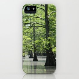 Cypress Trees in the Louisiana Swamp iPhone Case