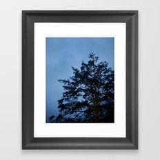 Evergreen at Twilight Framed Art Print