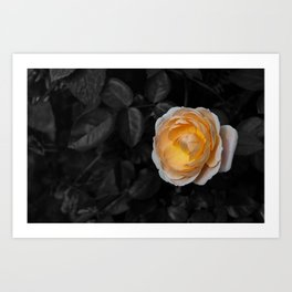 Delicate Yellow Art Print