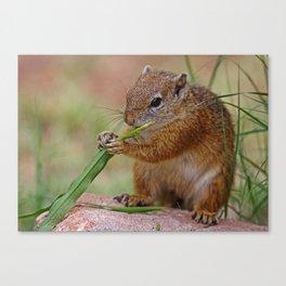 The Squirrel - Africa wildlife Canvas Print