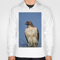 snatch Hoodies featuring Red-Tailed Hawk on Watch at Foothill and B Street by Ralph S. Carlson
